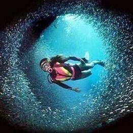За подводни спортове